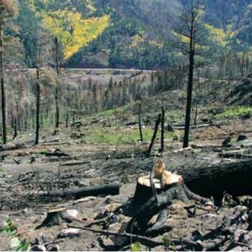 Drought - California